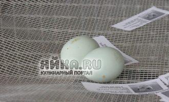 Голубые яйца на выставке