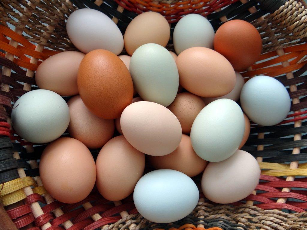 Разноцветные куриные яйца