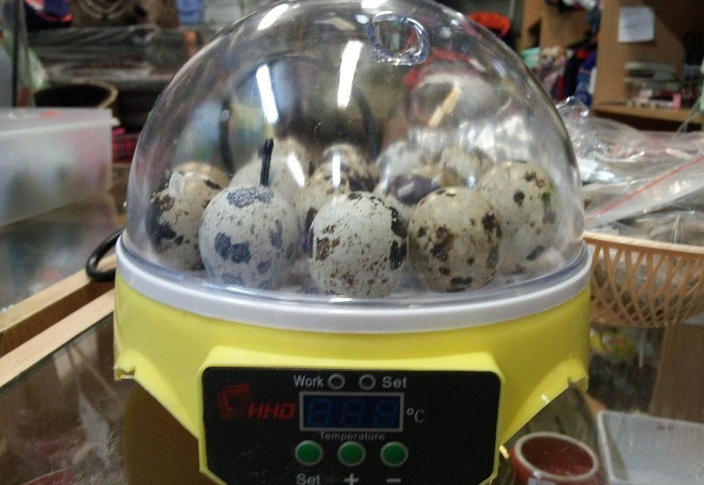 Мини-инкубатор для перепелиных яиц