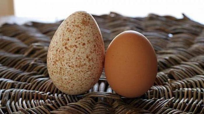 Индюшиное и куриное яйцо