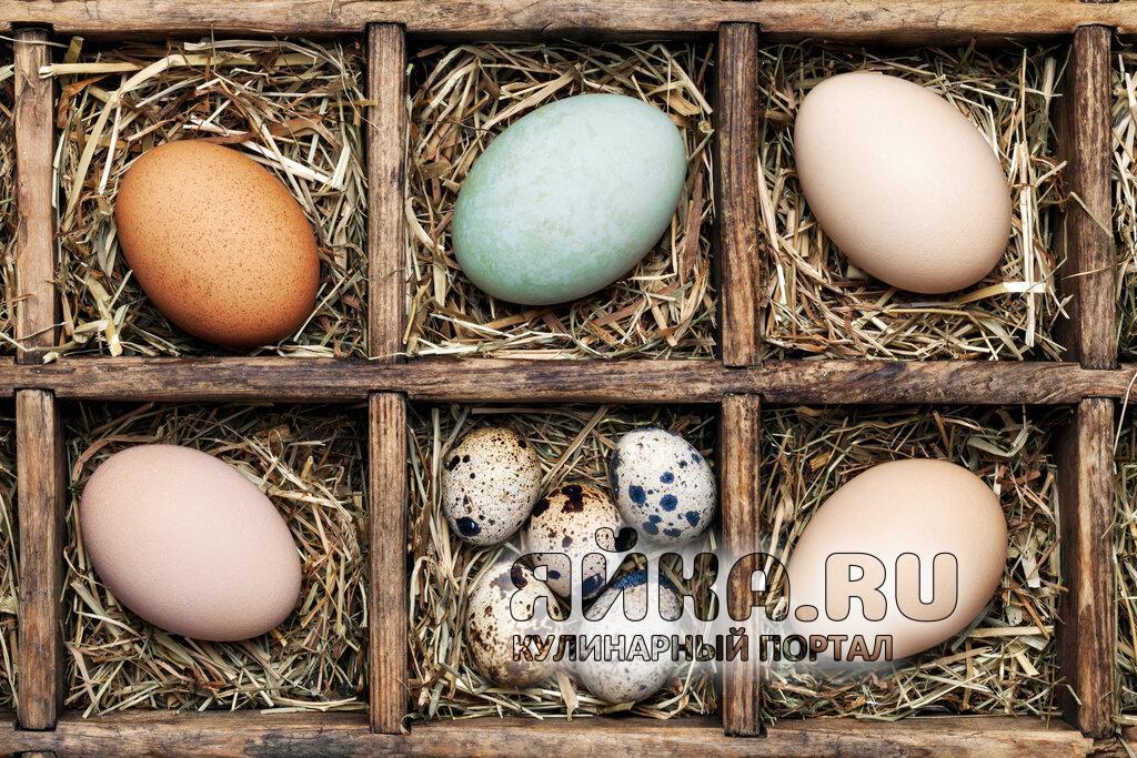 Яйца домашних птиц