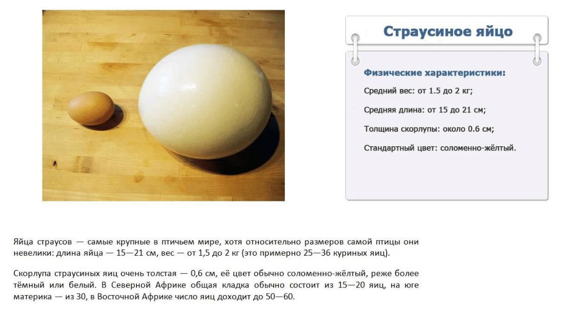 Сравнение куриного и страусиного яиц