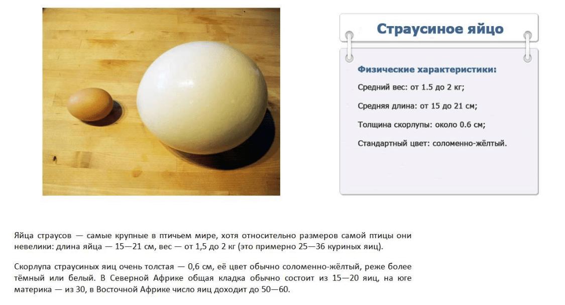Питательная ценность страусиных яиц