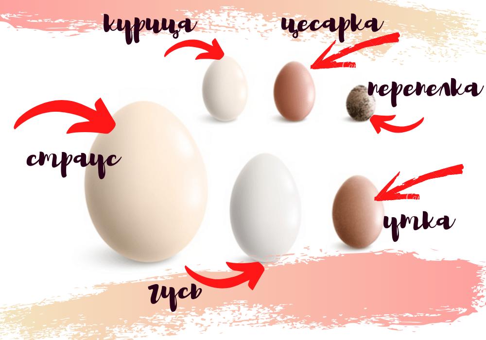 сравнение размера яиц